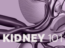 Kidney 101