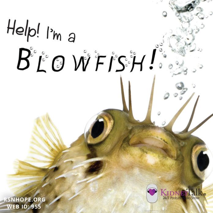 Weight Gain-Help-Im-a-Blowfish-Kidney-Talk