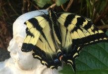 A Memory of Butterflies