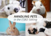 Handling Pets for the dialysis or transplant patient