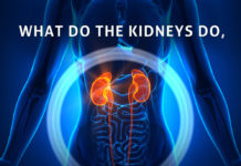 Kidney Talk What Do Kidneys Do