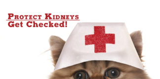 Protect your kidneys - get checked