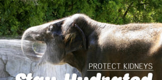 protect kidneys - Stay Hydrated