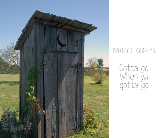protect kidneys - don't hold in urine